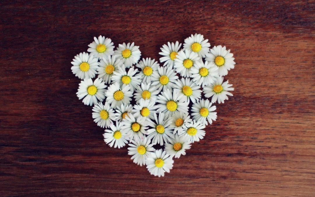 ein Herz aus Gänseblümchen